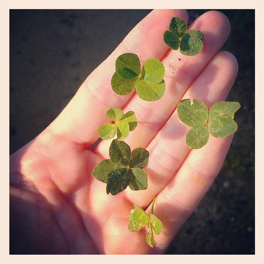 Another day, another 4-leafed clover