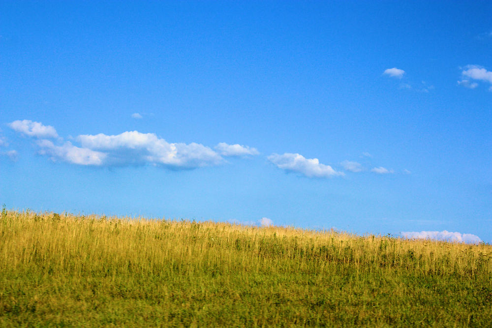 bright-blue-sky-above-a-grass-field-with-tall-grass.jpg