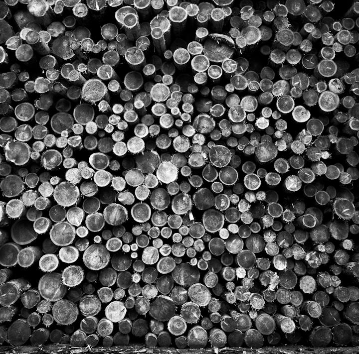 Logs. Leogang, Austria