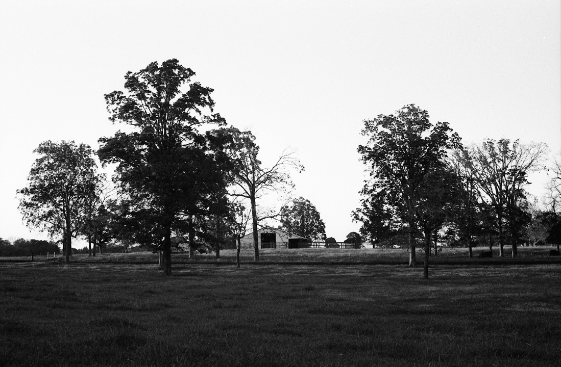 Oak trees and a barn. East Texas