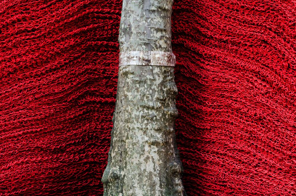 chainlinktree.jpg