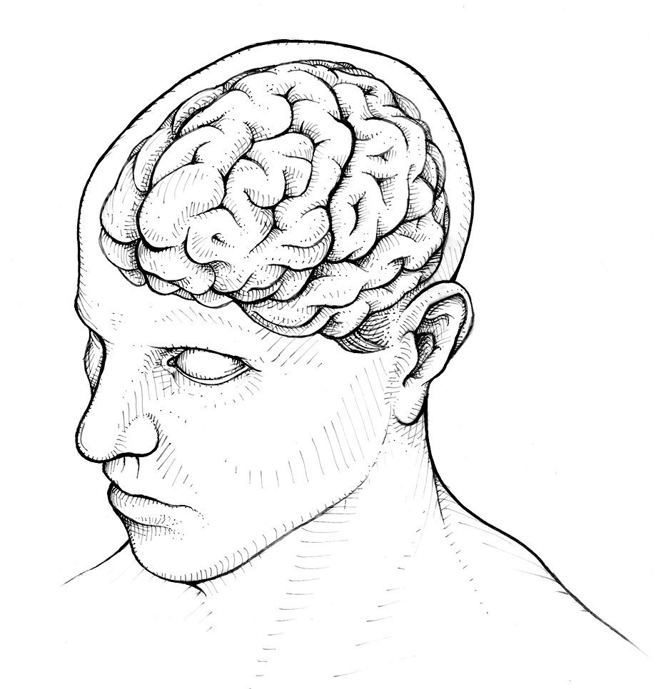 Line Art Brain : Human brain and head line drawing sketch coloring page