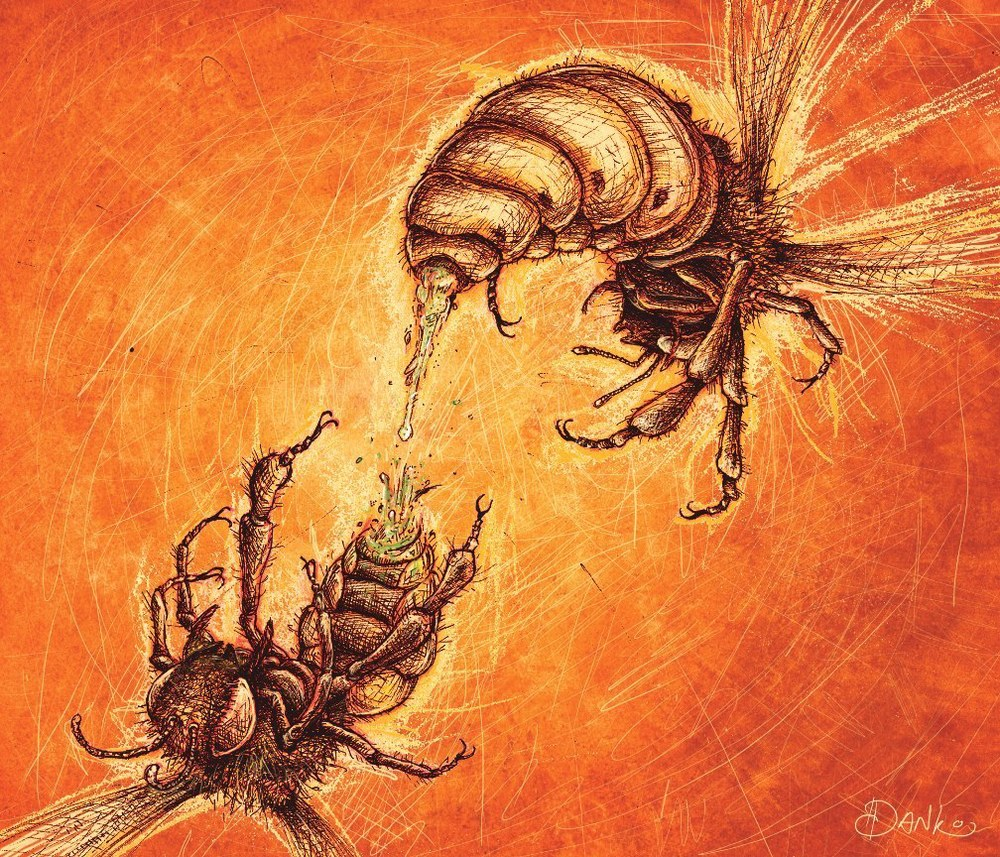 Bee Sex Illustration