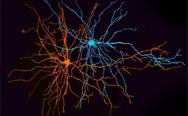 1-neuroscienti.jpg