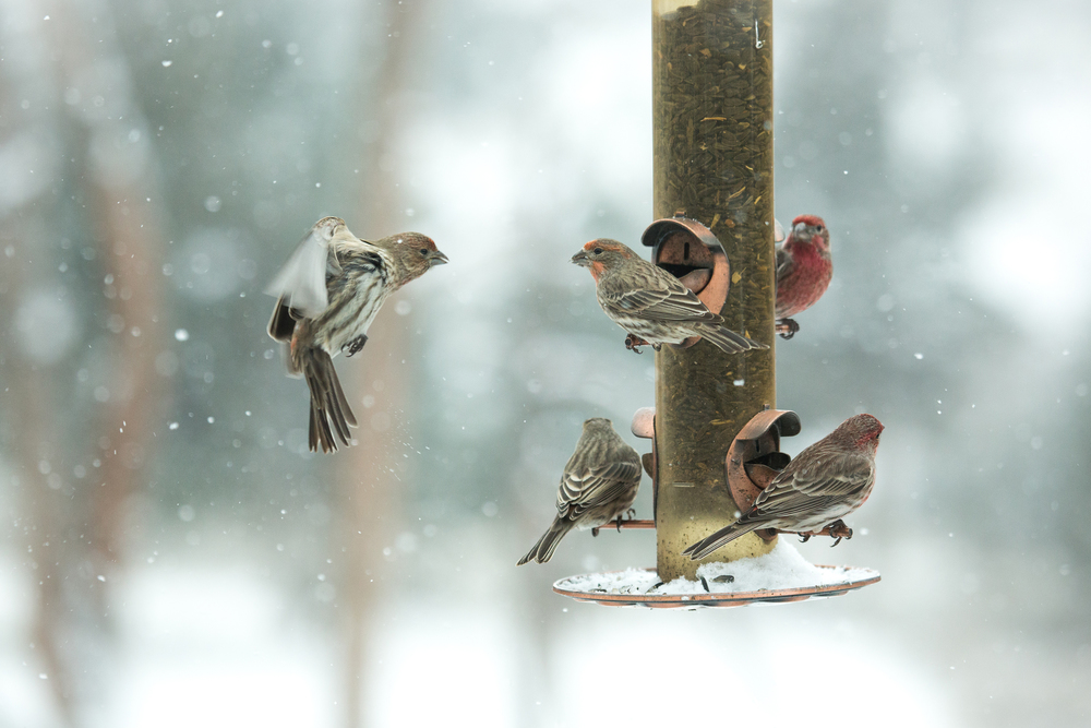 Birds at Feeder Web.jpg