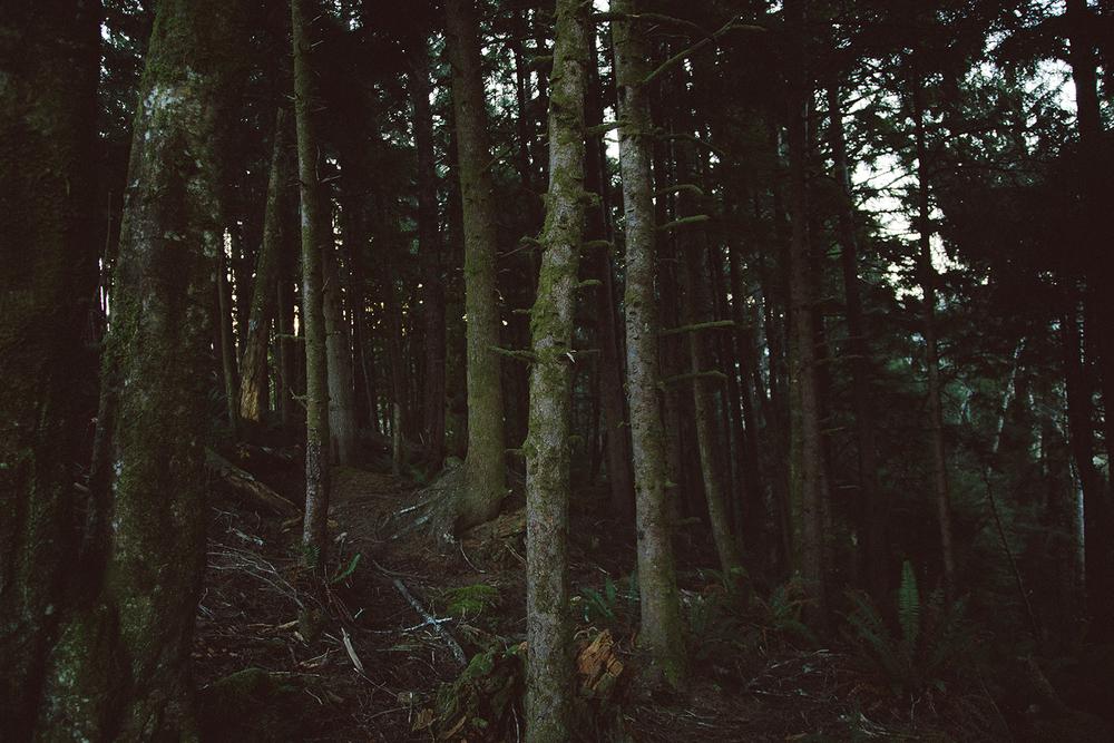 wood 1500.jpg