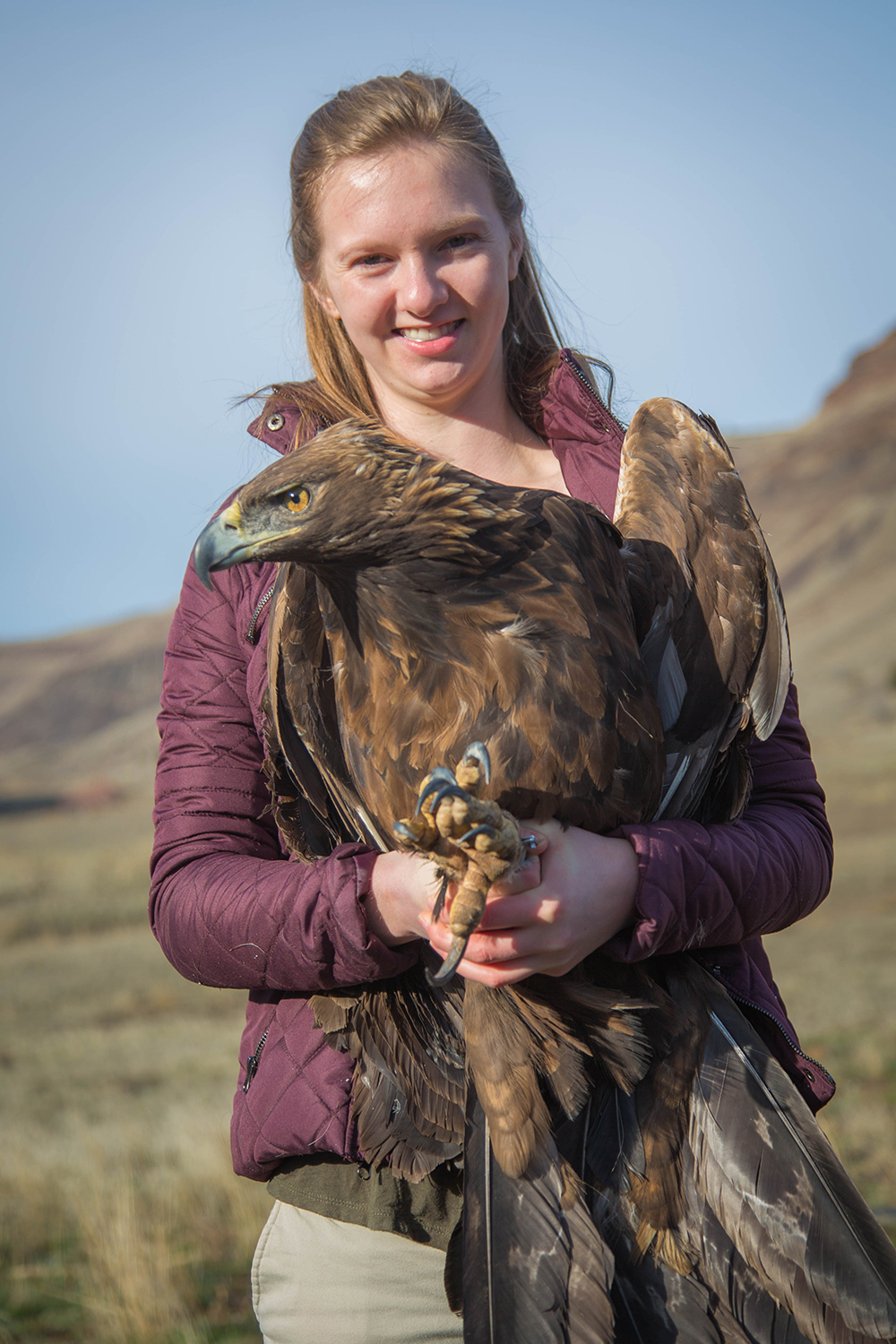 Willow Holding on tight to an Adult Female Golden Eagle