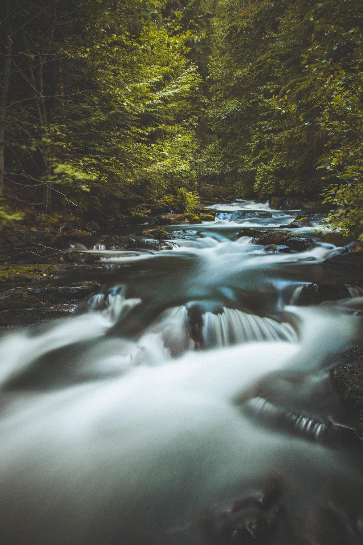River_trees2.jpg