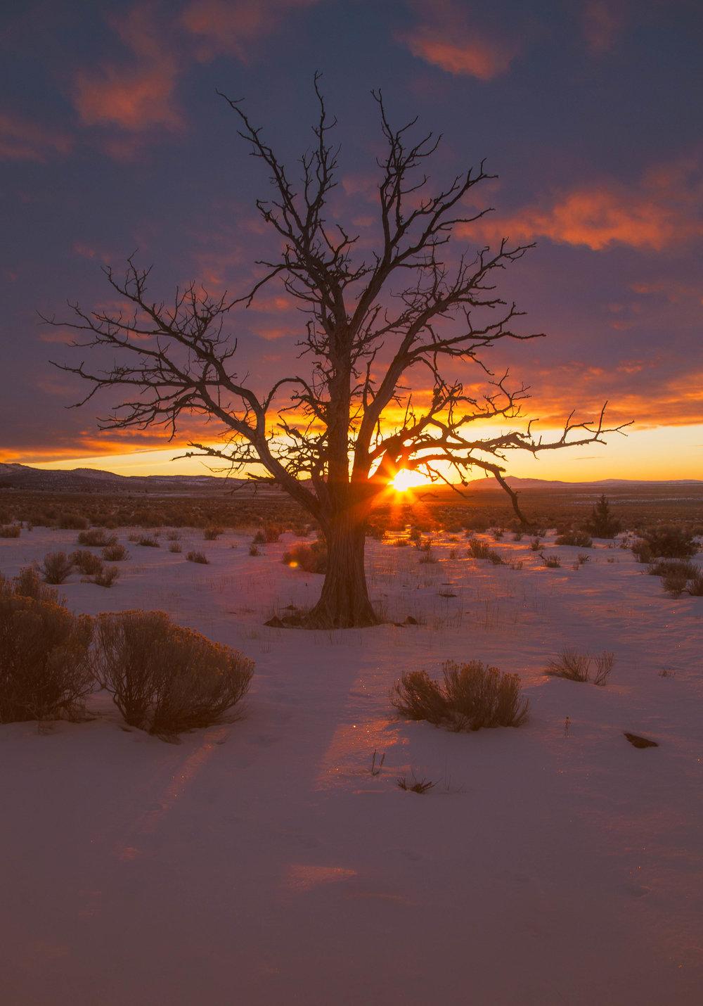 Tree in snow.jpg