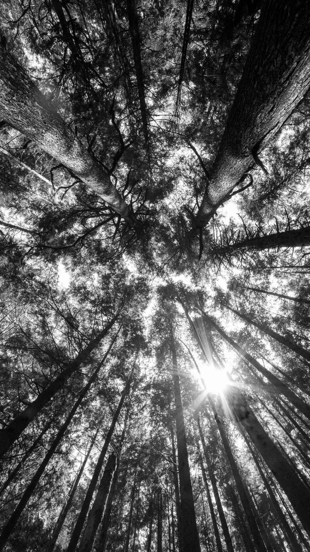 TREE_LIGHT.jpg