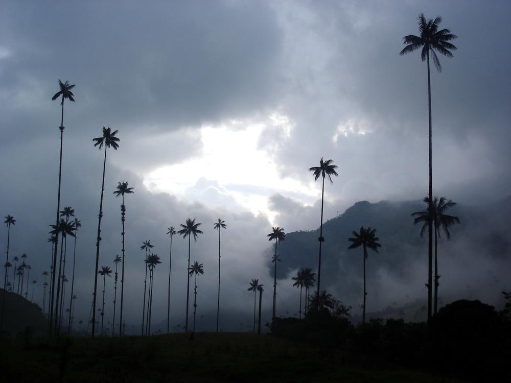 Valle de Cocora, Quindío (Kolumbien)