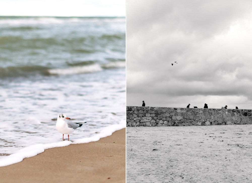 ostsee-strand-möwe