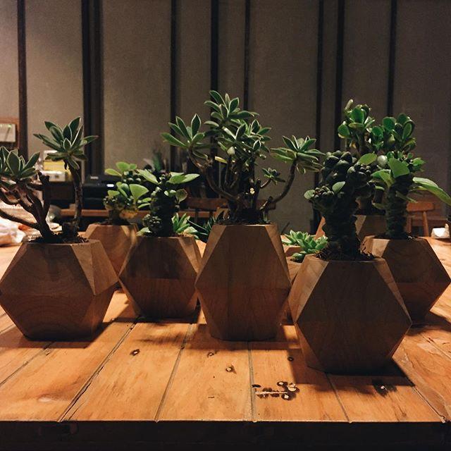 Small plant pot, made by @rakattan #plant #cactus #pot #potplant