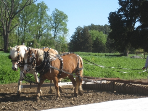 Our Horses — Flying Plow Farm