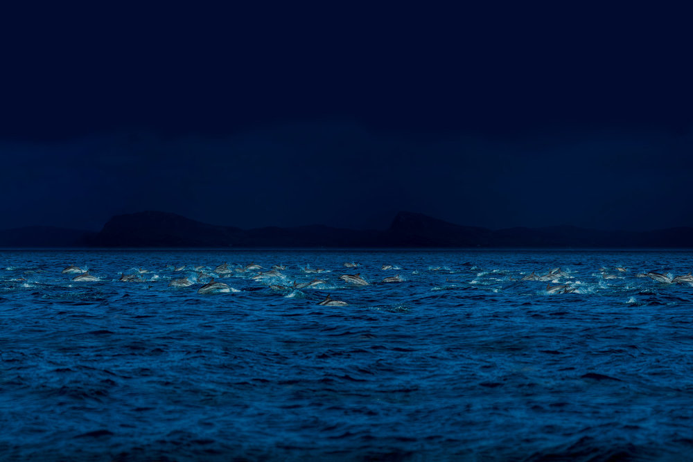 Young dolphins, near Tanger, Morocco