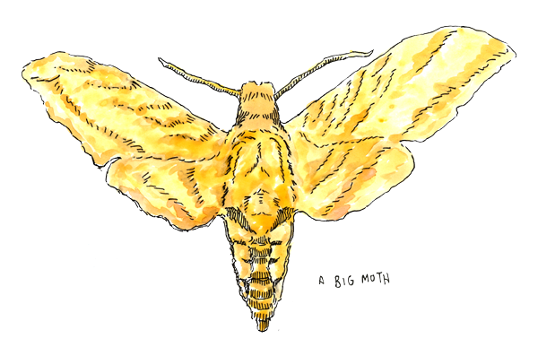 MothKing.png