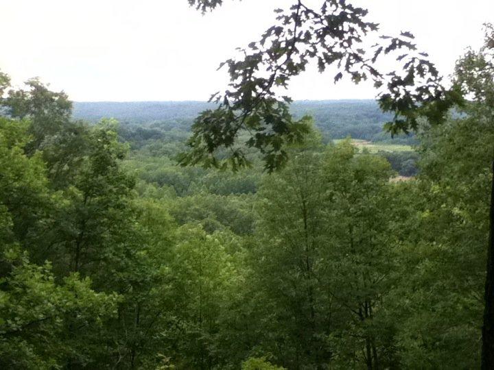 camp trees.jpg