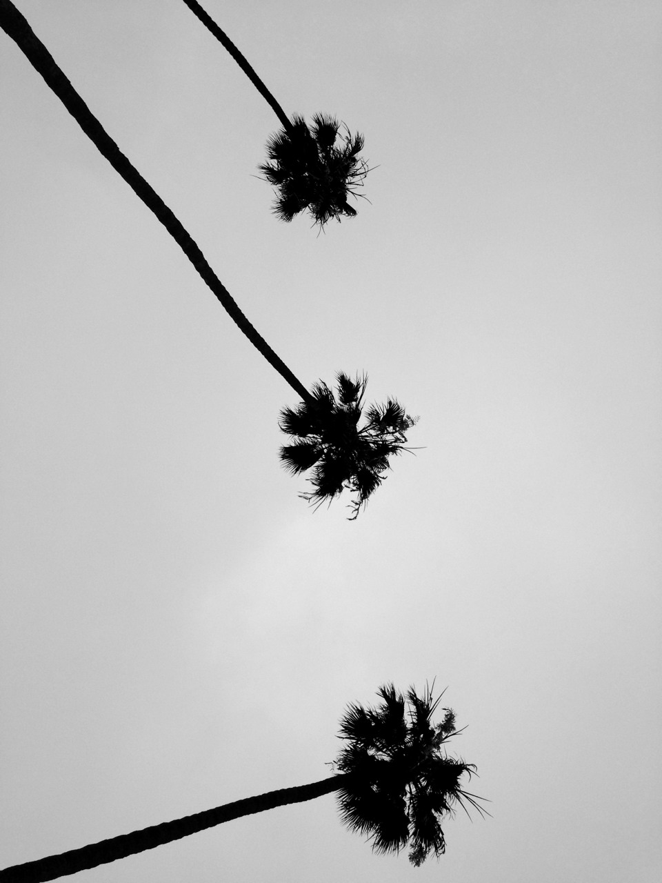The first of one attempt to photograph some palm trees while in California…