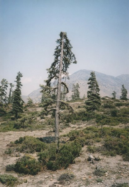 rmanyc: (via V.D. - Some windy trees - #1)