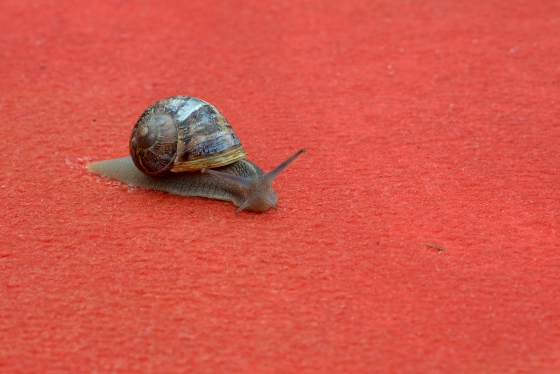 thesnugglefactory :     Snail on the Cannes red carpet, 2012, via  New York  magazine.  Photo: ALBERTO PIZZOLI/AFP/GettyImages      this snail needs a name! anyone? christian snail? …