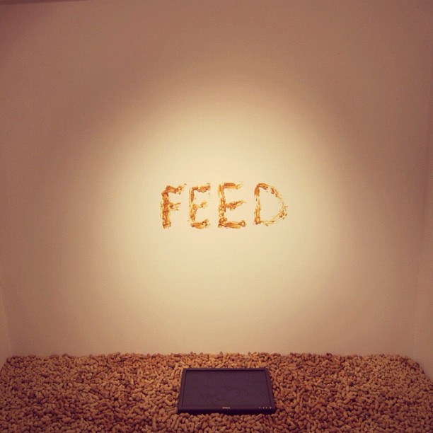 FEED, installation at Invisible Exports in conjunction with #140hBerlin: peanuts, peanut butter, monitor. 2011 (Taken with  instagram )