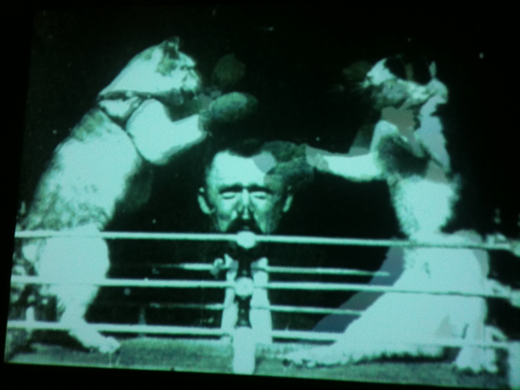 Boxing kittehs for @VAJIAJIA. Hope you're feeling better!    Photo taken at the Museum of the Moving Image a few weeks ago. No copyright infringement intended. Kittehs are protected under fair use yah?