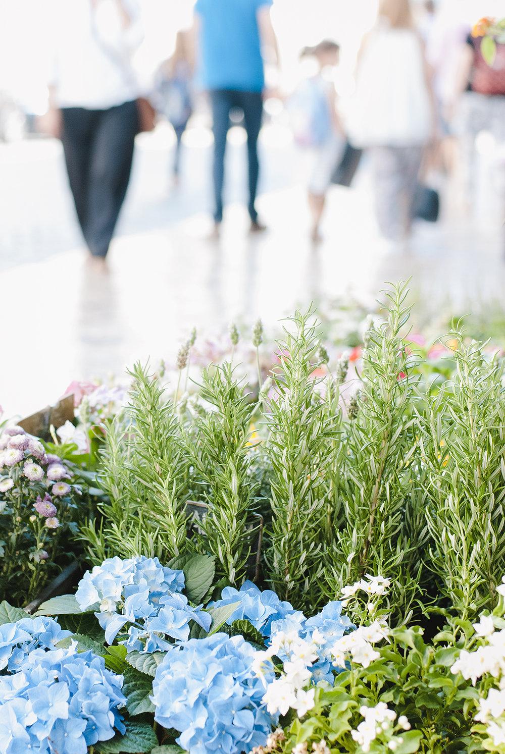 flowershop1.jpg