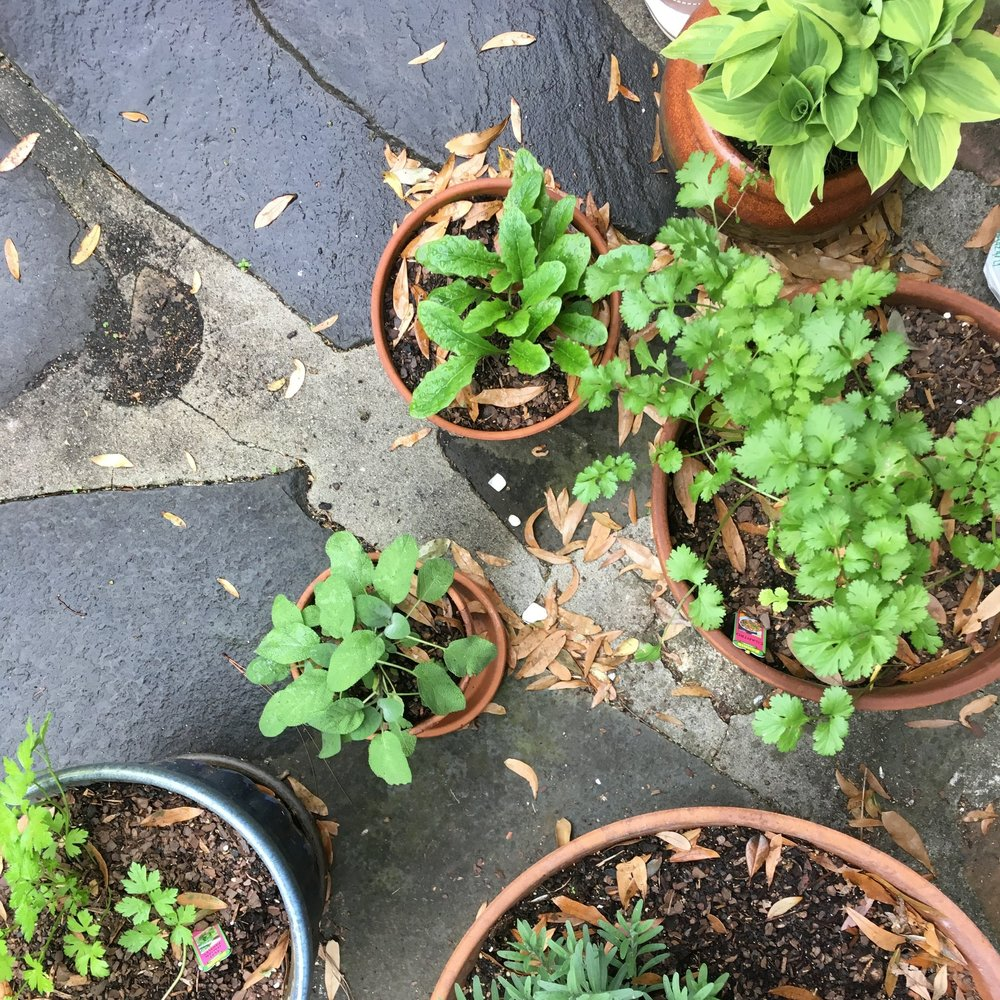 & potted herbs in the backyard.