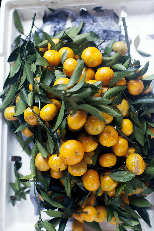 tangerines_web.jpg