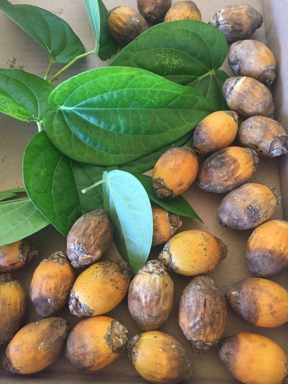 Pugua (Betel Nut)
