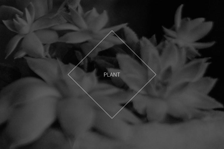 ca-title-plant.jpg