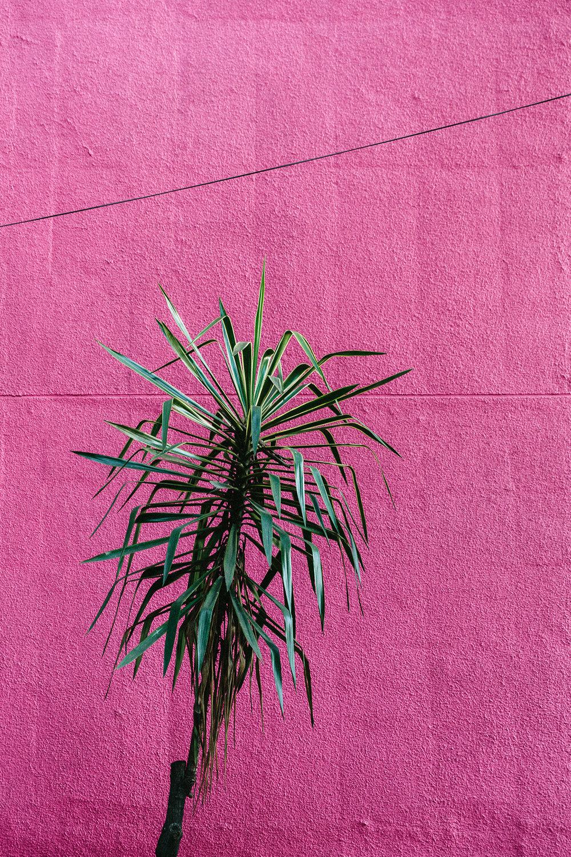 El Camino & RP: Mexico City
