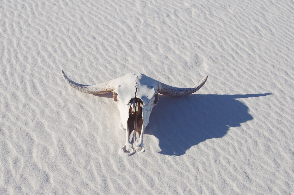 yak on gypsum.JPG
