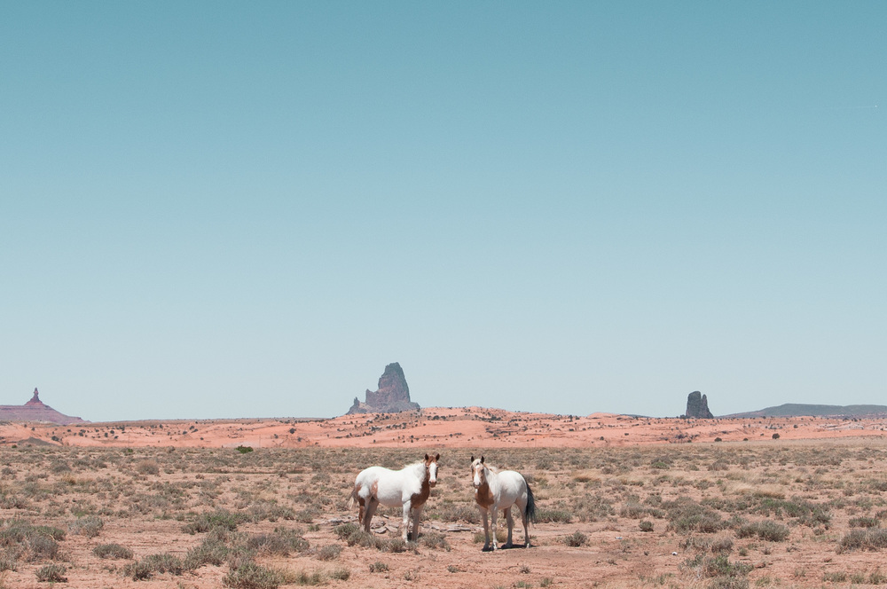 Kayenta horses for website (1 of 1).jpg