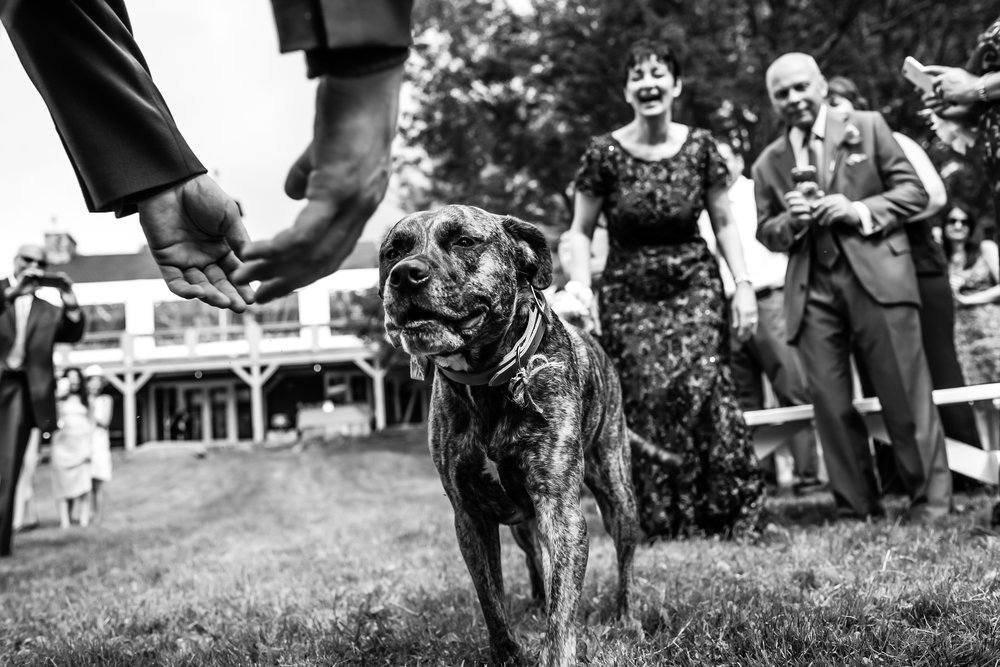 Stefy Hilmer Photography - dog bringing rings down the aisle during ceremony.jpg