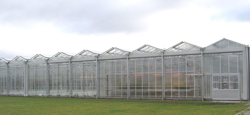 Keep rats out of your greenhouse