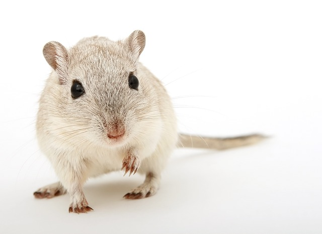 How Does Rat Repellent Work?
