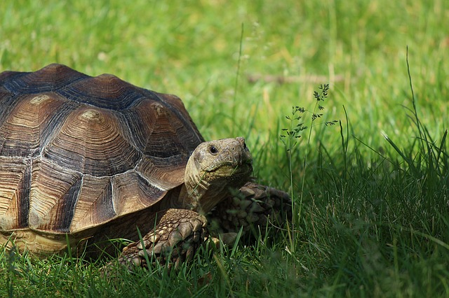 Protect Your Tortoise From Attack By Rats