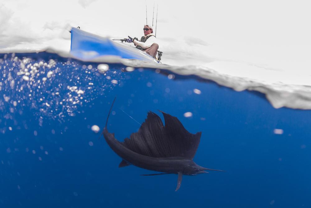 underSailfish-4600_Sail.jpg