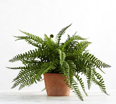 faux-potted-boston-fern-b.jpg