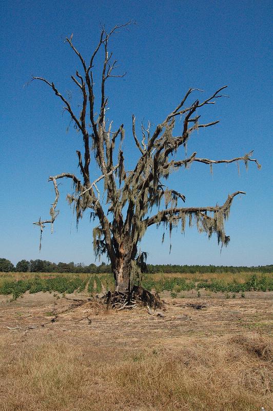 Lone Oak, Hwy. 203, Ga