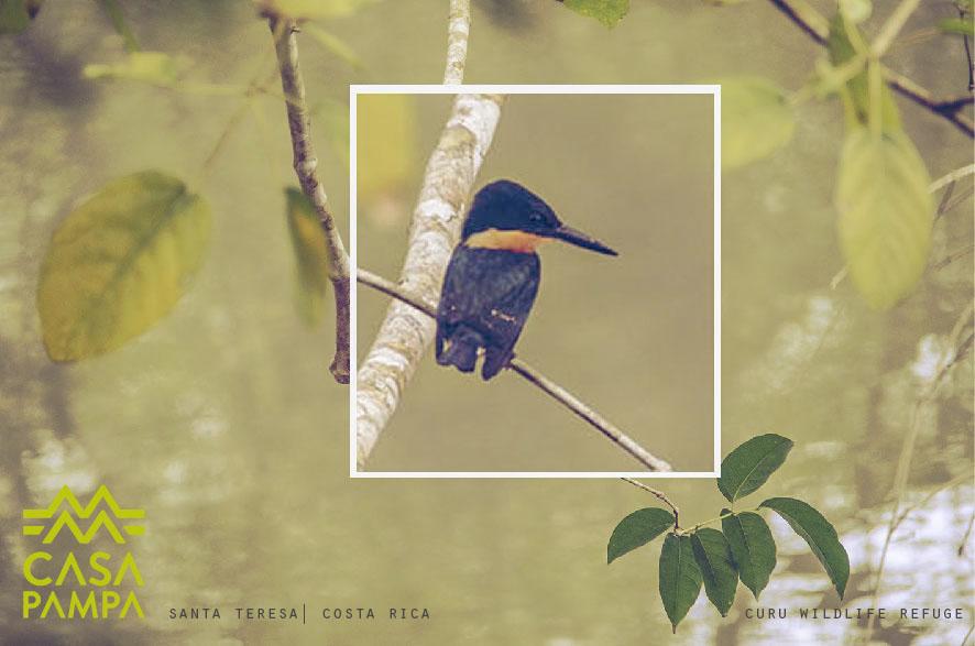 BirdwatchingSantaTeresa