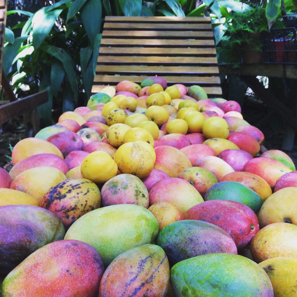 Casa Pampa Sustentable livng lab Mango01.jpg