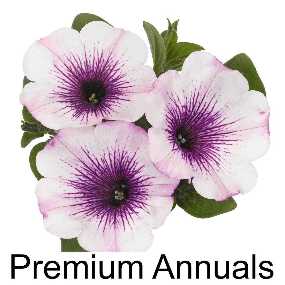 Premium Annuals3.jpg