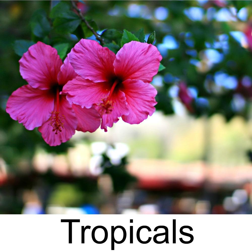 tropicals3.jpg