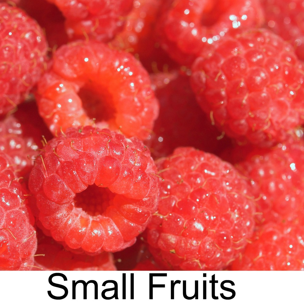 small fruits3.jpg