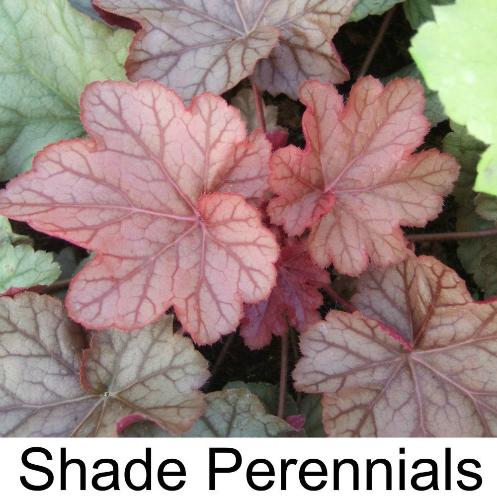 shade perennials3.jpg