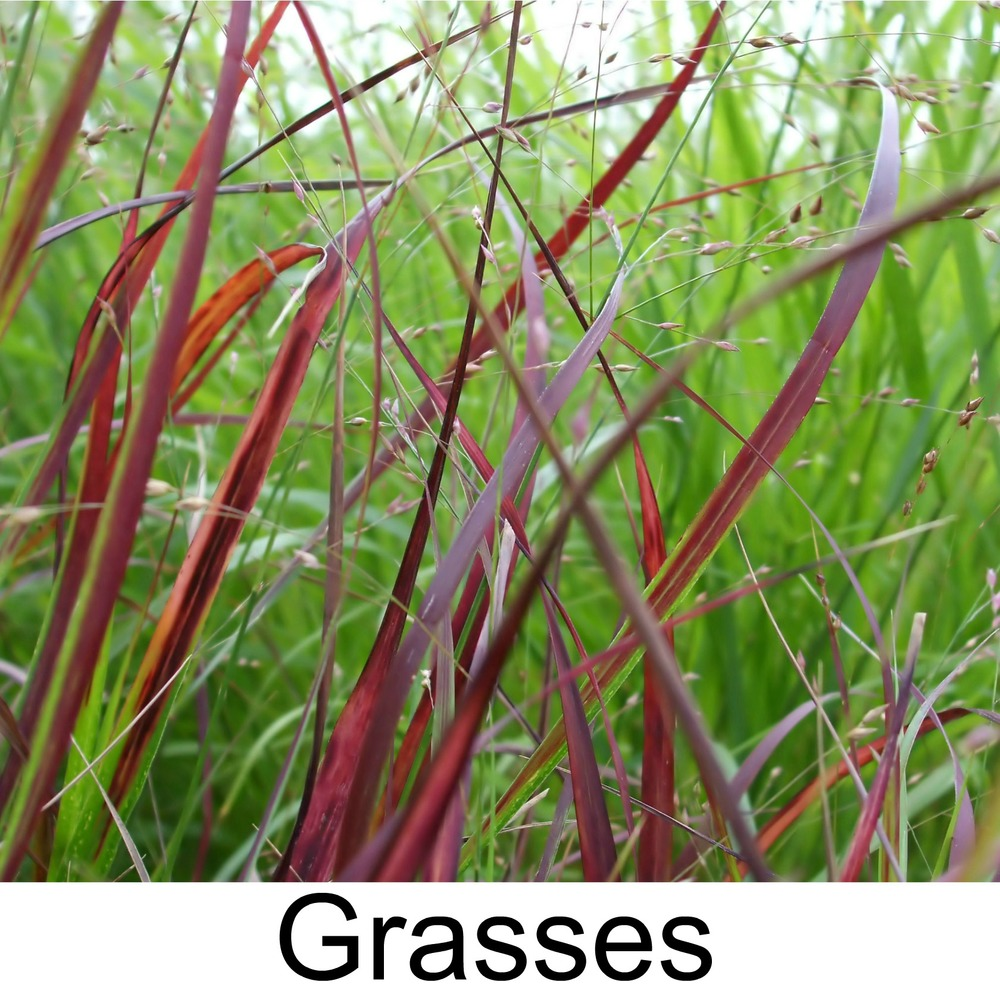 Ornamental Grasses3.jpg