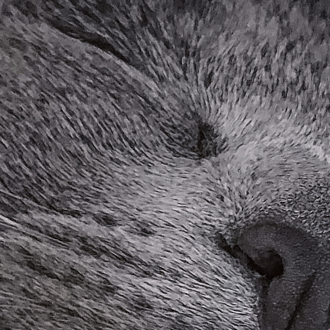 zoomed into 100%, edited kitten nose
