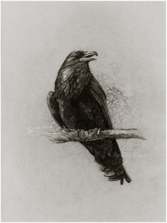 Yellowstone Raven by Julie Doornbos